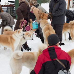 2014「犬っこまつり」秋田犬大集合!