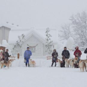 2014「犬っこまつり」早朝の撮影会