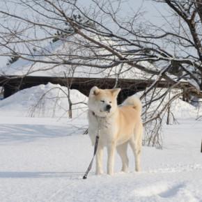 かた雪大好き