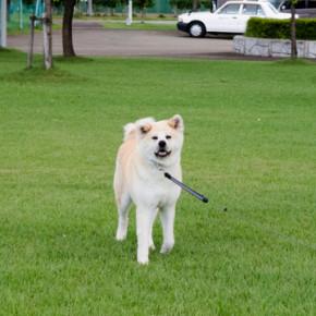 秋田犬さくら、雑誌に載ります