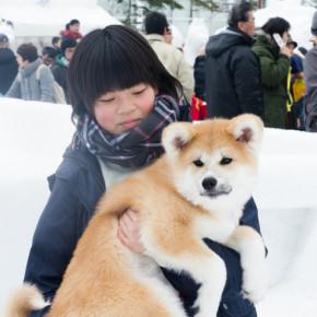 犬っこまつり 2015(3)