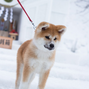 犬っこまつり 2015(1)